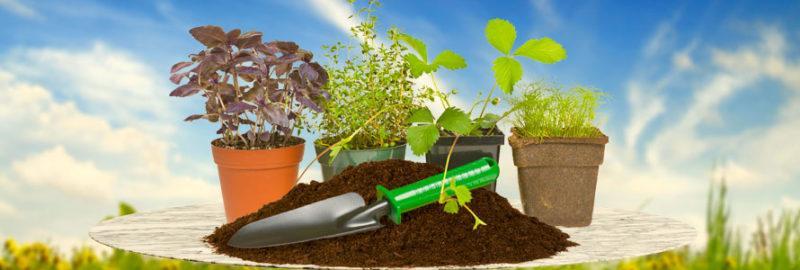 Грунт для растений