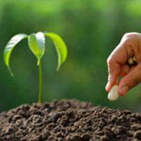грунт для сада и огорода