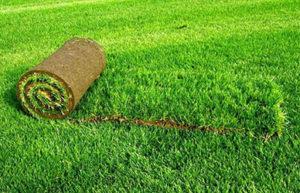 рулонный газон в Москве