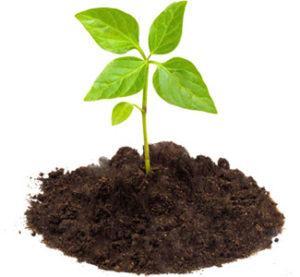 купить биогрунт