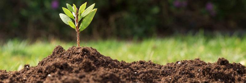 Повысить плодородность почвы