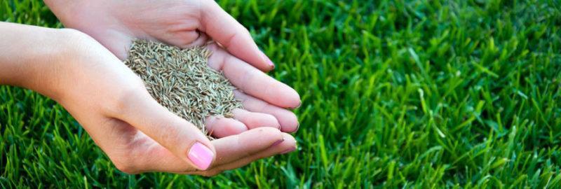 Выбор травы для газона