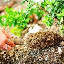 лучшие удобрения для огорода