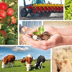 бизнес идеи для сельского хозяйства
