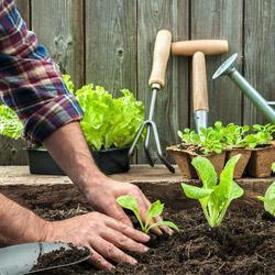 начинающим садоводам